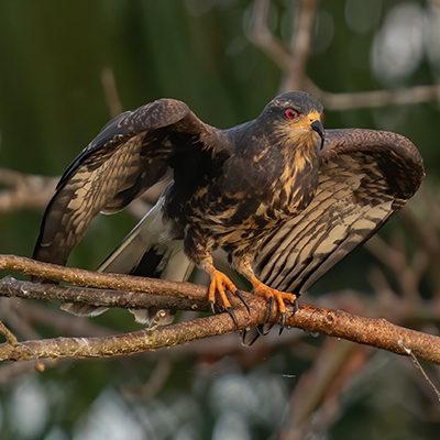 wildlife_eyecandysafari